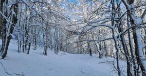 Fonte Pozzotello e il bosco dei lupi